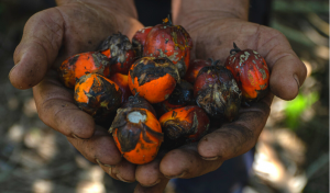 Other Side of Palm Oil